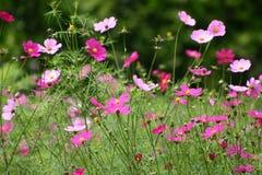 άνοιξη λουλουδιών Στοκ Εικόνες