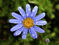 άνοιξη λουλουδιών στοκ εικόνα