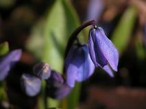 άνοιξη λουλουδιών Στοκ φωτογραφίες με δικαίωμα ελεύθερης χρήσης
