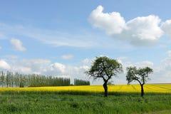 Άνοιξη με τα δέντρα και τον τομέα βιασμών Στοκ φωτογραφία με δικαίωμα ελεύθερης χρήσης