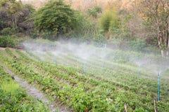 Άνοιξη νερού Στοκ φωτογραφία με δικαίωμα ελεύθερης χρήσης