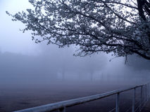 άνοιξη ομίχλης ανθίσεων στοκ φωτογραφίες