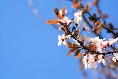 άνοιξη ουρανού λουλουδιών Στοκ Εικόνες