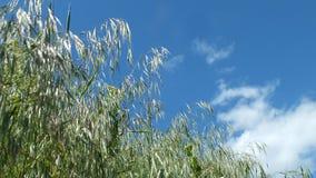 Άνοιξη ουρανός χλόης Στοκ εικόνα με δικαίωμα ελεύθερης χρήσης