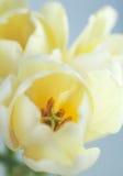 άνοιξη λουλουδιών ανασκόπησης Στοκ Φωτογραφίες