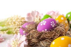 άνοιξη λουλουδιών αυγών Στοκ φωτογραφίες με δικαίωμα ελεύθερης χρήσης