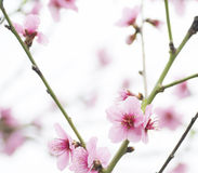 άνοιξη λουλουδιών ημέρας Στοκ εικόνα με δικαίωμα ελεύθερης χρήσης