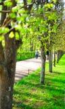 άνοιξη πάρκων αλεών Στοκ Εικόνες