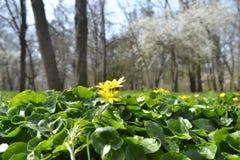 άνοιξη πάρκων βρεφικών σταθμών της Ολλανδίας λουλουδιών keukenhof στοκ φωτογραφία με δικαίωμα ελεύθερης χρήσης