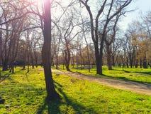 άνοιξη πάρκων βρεφικών σταθμών της Ολλανδίας λουλουδιών keukenhof Στοκ Εικόνες