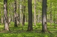 άνοιξη πάρκων Στοκ εικόνα με δικαίωμα ελεύθερης χρήσης