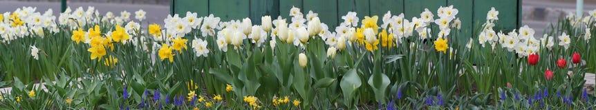 άνοιξη πανοράματος λουλουδιών Στοκ Εικόνες