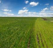 άνοιξη πεδίων γεωργίας Στοκ φωτογραφία με δικαίωμα ελεύθερης χρήσης