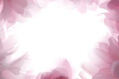 άνοιξη πλαισίων λουλουδιών Στοκ φωτογραφίες με δικαίωμα ελεύθερης χρήσης