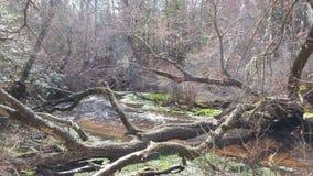 άνοιξη ποταμών φύσης σύνθεσης Στοκ Εικόνες