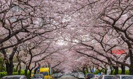 Άνοιξη σε Busan Νότια Κορέα Στοκ Φωτογραφίες