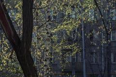 Άνοιξη στη Μόσχα, Ρωσία Στοκ Εικόνες