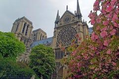 Άνοιξη στη Notre Dame, Παρίσι Στοκ Εικόνα