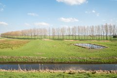 Άνοιξη στις Κάτω Χώρες Στοκ εικόνες με δικαίωμα ελεύθερης χρήσης