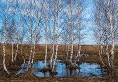 Άνοιξη στον ποταμό Russia Στοκ φωτογραφία με δικαίωμα ελεύθερης χρήσης