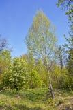 Άνοιξη στο δάσος Στοκ Φωτογραφία