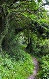 Άνοιξη στο δάσος Στοκ Εικόνες