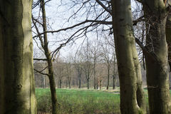 Άνοιξη στο δάσος Στοκ Φωτογραφίες