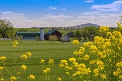 Άνοιξη στο αγρόκτημα Στοκ Φωτογραφίες