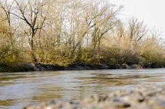 Άνοιξη στο δασικό ποταμό Στοκ Εικόνες