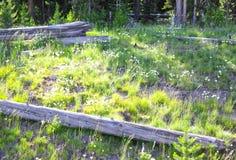 Άνοιξη στο εθνικό πάρκο Yellowstone Στοκ εικόνα με δικαίωμα ελεύθερης χρήσης