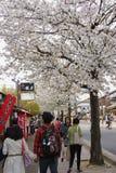 Άνοιξη στο Κιότο, Ιαπωνία Στοκ Εικόνα