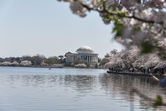 Άνοιξη στο μνημείο του Jefferson στην Ουάσιγκτον Στοκ εικόνες με δικαίωμα ελεύθερης χρήσης