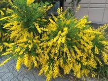 Άνοιξη στο λουλούδι Στοκ φωτογραφία με δικαίωμα ελεύθερης χρήσης