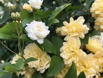 Άνοιξη στο λουλούδι Στοκ εικόνες με δικαίωμα ελεύθερης χρήσης