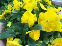 Άνοιξη στο λουλούδι Στοκ Φωτογραφία