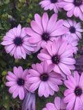 Άνοιξη στο λουλούδι Στοκ εικόνα με δικαίωμα ελεύθερης χρήσης