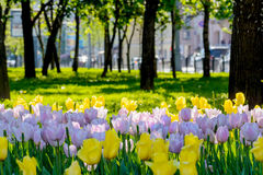 Άνοιξη στο πάρκο πόλεων Στοκ Εικόνα