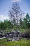 Άνοιξη στο ρωσικό δάσος Στοκ Εικόνες