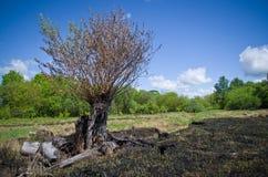 Άνοιξη στο ρωσικό δάσος Στοκ εικόνα με δικαίωμα ελεύθερης χρήσης