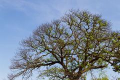 Άνοιξη του δέντρου Στοκ φωτογραφία με δικαίωμα ελεύθερης χρήσης