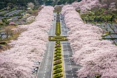 Άνοιξη του Σιζουόκα Ιαπωνία στοκ φωτογραφίες