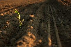 άνοιξη φυτών Στοκ εικόνες με δικαίωμα ελεύθερης χρήσης