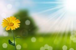 άνοιξη φύσης λουλουδιών &a Στοκ φωτογραφία με δικαίωμα ελεύθερης χρήσης