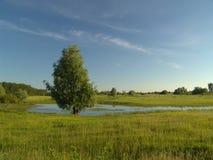 άνοιξη φύσης Στοκ φωτογραφία με δικαίωμα ελεύθερης χρήσης