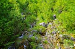 Άνοιξη φύσης Στοκ εικόνα με δικαίωμα ελεύθερης χρήσης