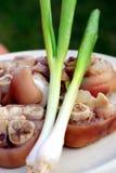 άνοιξη χοιρινού κρέατος κρεμμυδιών κρέατος Στοκ φωτογραφίες με δικαίωμα ελεύθερης χρήσης