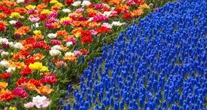 άνοιξη χρωμάτων Στοκ εικόνα με δικαίωμα ελεύθερης χρήσης
