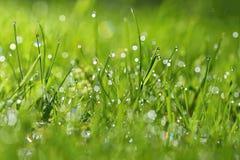 Άνοιξη Όμορφο φυσικό υπόβαθρο της πράσινης χλόης με τις πτώσεις δροσιάς και νερού Εποχιακή έννοια - πρωί στη φύση Στοκ εικόνες με δικαίωμα ελεύθερης χρήσης