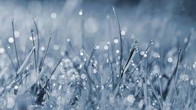 Άνοιξη Όμορφο φυσικό υπόβαθρο της πράσινης χλόης με τις πτώσεις δροσιάς και νερού Εποχιακή έννοια - πρωί στη φύση Στοκ εικόνα με δικαίωμα ελεύθερης χρήσης