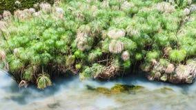 Άνοιξη Arethusa Fonte Arethusa στις Συρακούσες Στοκ φωτογραφία με δικαίωμα ελεύθερης χρήσης